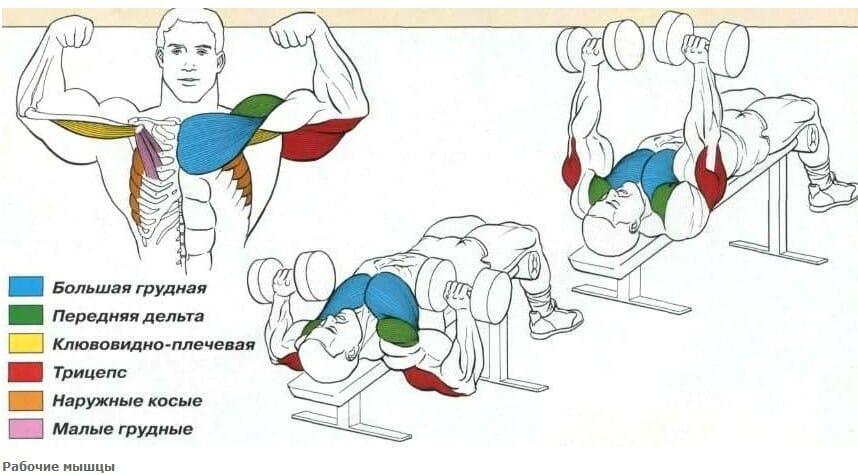 жим под углом вниз работа мышц