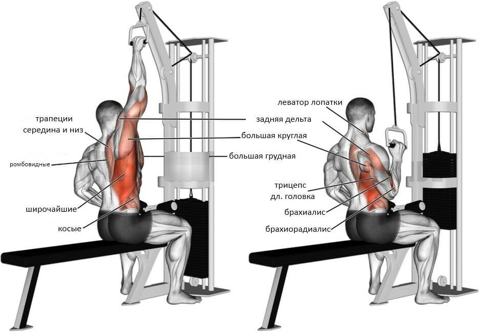 Тяга одной рукой с верхнего блока мышцы