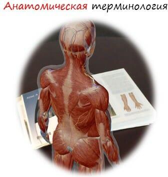 анатомическая терминология лого