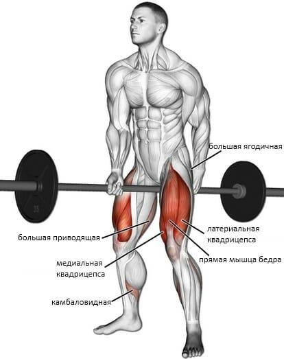 Приседания джефферсона мышцы