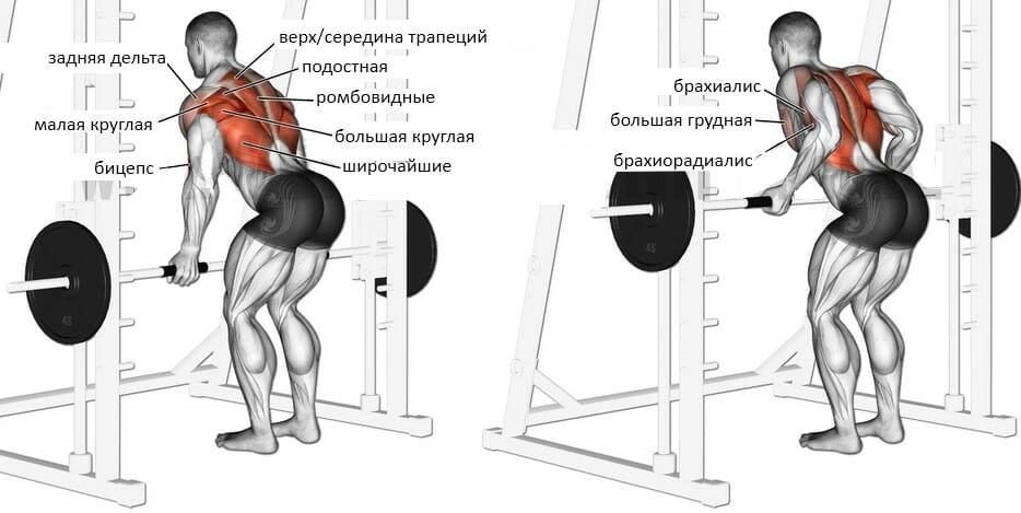 Тяга ятса в смита мышцы