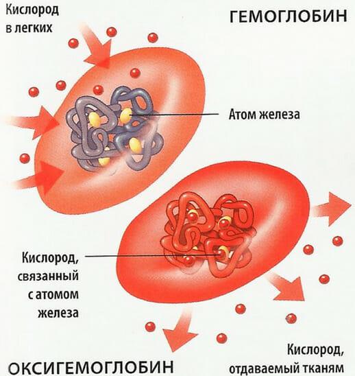 кислород кровь гемоглобин