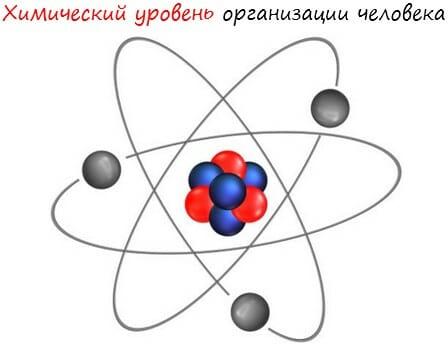 Химический уровень организации человека лого